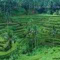 Знаменитые рисовые террасы