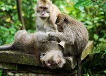 мартышки в лесу обезьян Убуд Бали