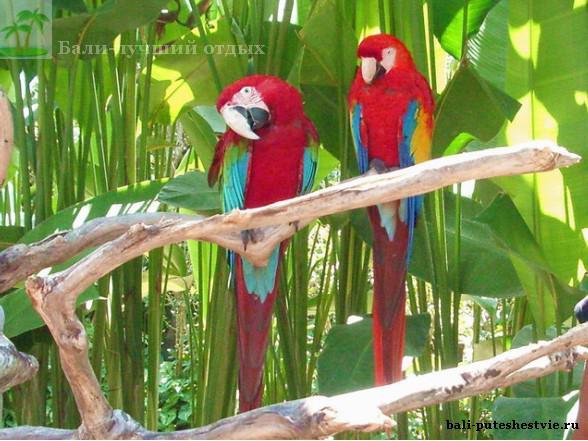 Красочные попугаи в парке птиц на Бали