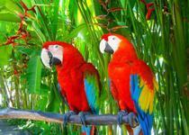 Парк птиц на Бали очень интересный и достойный