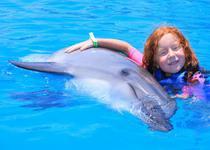 20 минут свободного купания с дельфинами в одном бассейне