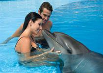 Дрессированные дельфины с удовольствием играют и плавают со всеми желающими