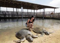 Гигантские морские черепахи