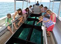 По пути на остров черепах рассматриваете подводную жизнь через стеклянное дно лодки