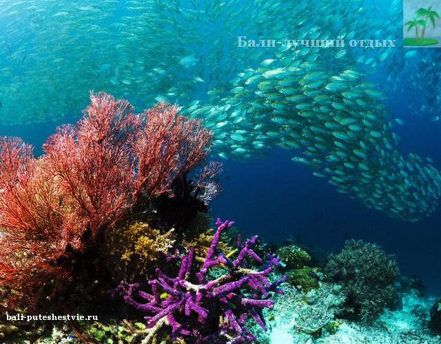 Оргомные косяки рыб на Бали