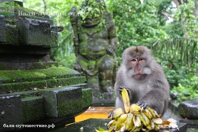 Убуд - лес обезьян