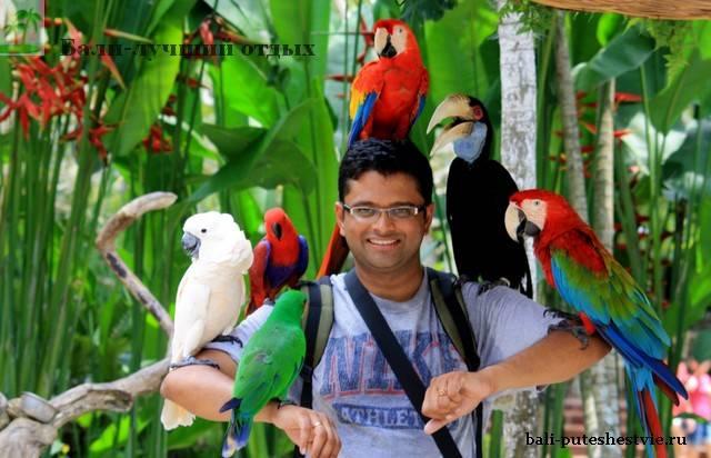 Парк птиц на Бали