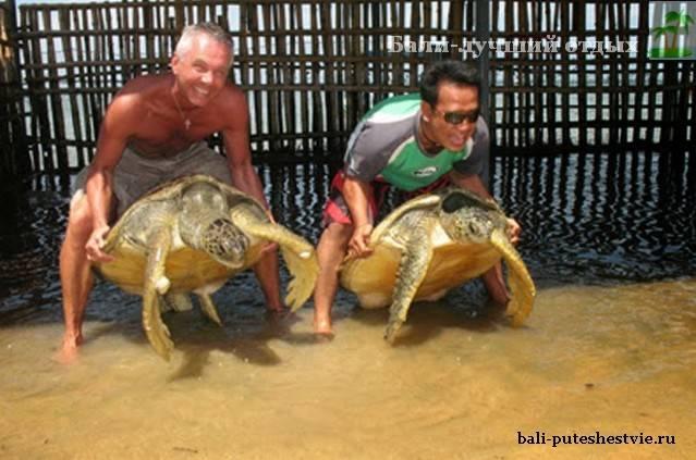 Экскурсия остров черепах на Бали