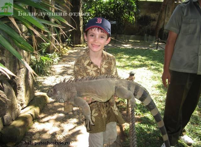 Рептилии в парке птиц и рептилий на Бали