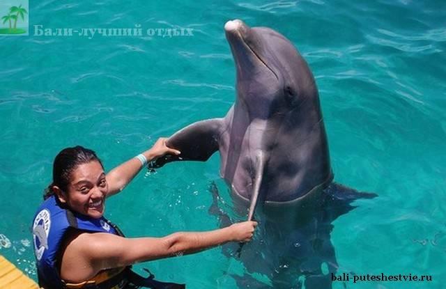 купание с дельфинами