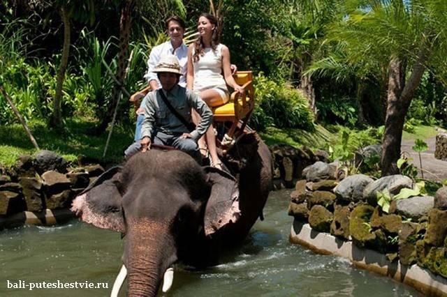 Катание на слонах на Бали