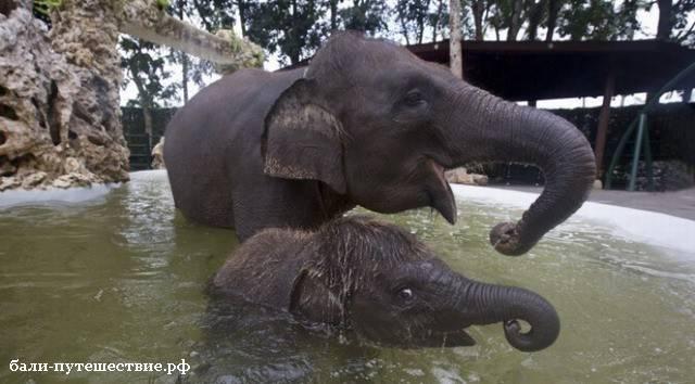 В парке слонов на Бали