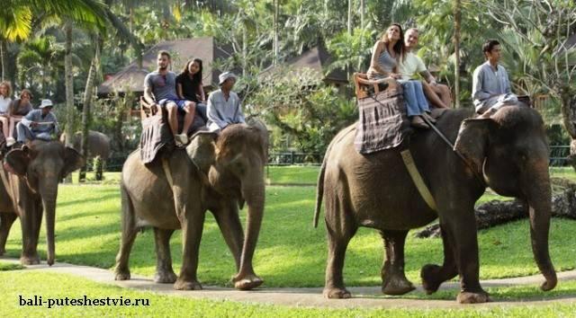 сафари на слонах на Бали