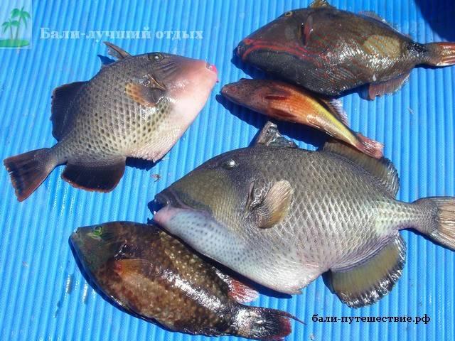 коралловая рыбалка на Бали