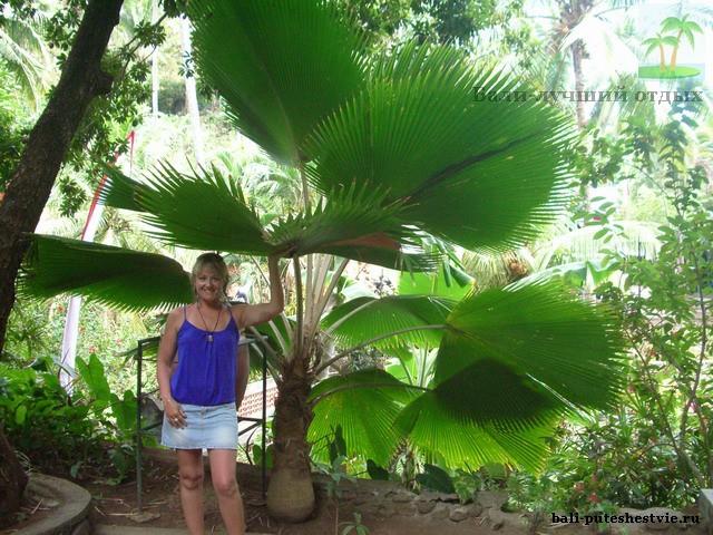Растительность Бали