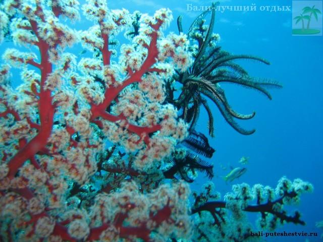 Шикарные подводные сады в море Бали