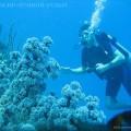 На Бали отличный дайвинг